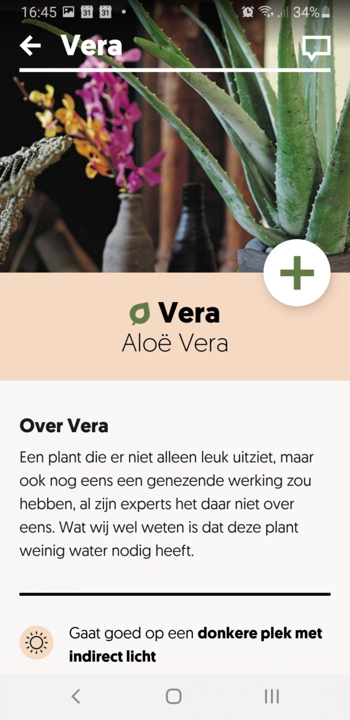 Beschrijving Aloe Vera plant