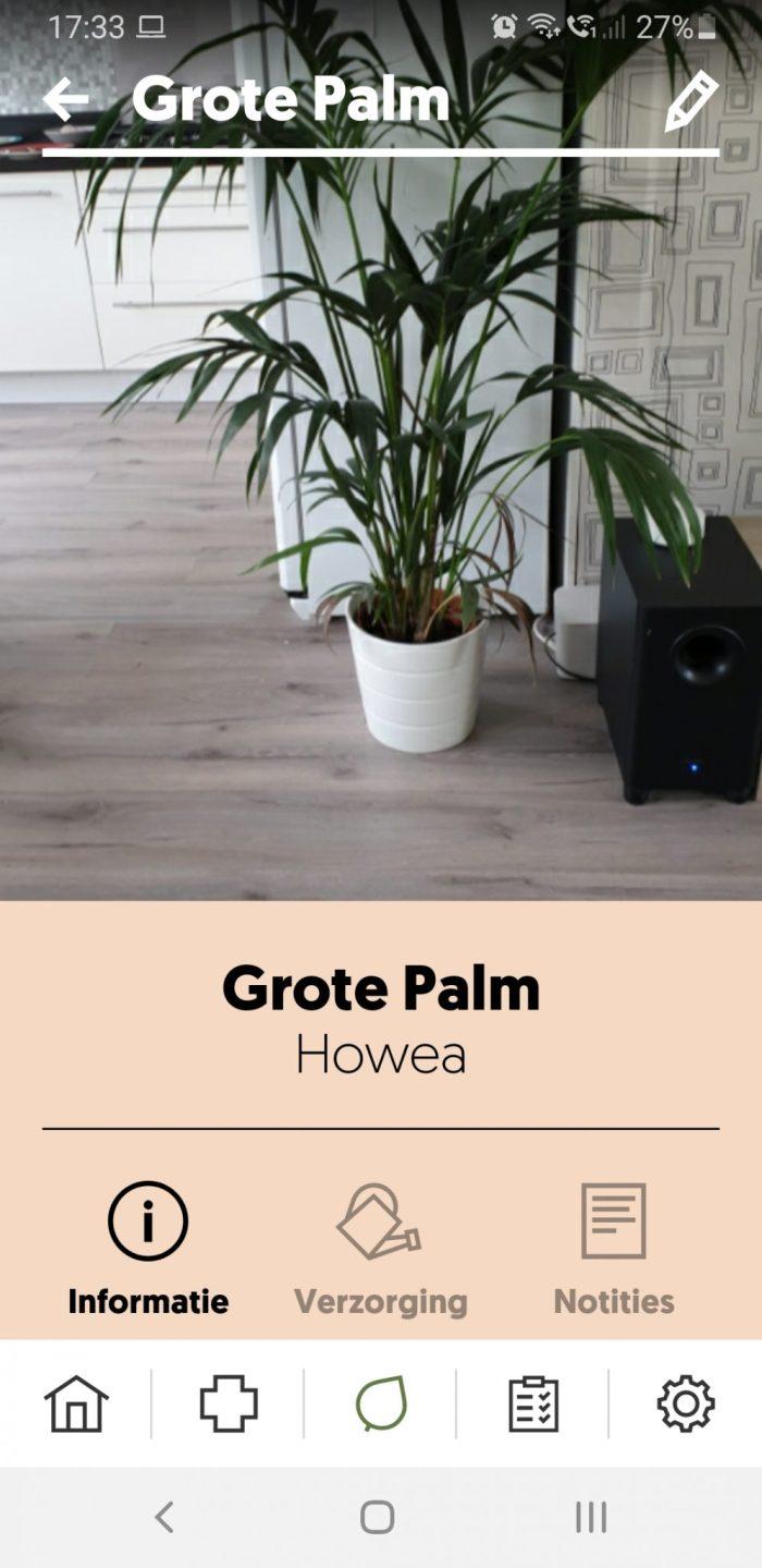 Mijn Howea palm