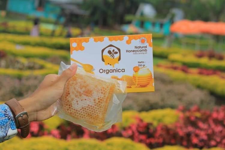 Madu sarang asli, ciri madu sarang asli, cara membedakan madu sarang asli dan palsu, madu sarang asli dan palsu
