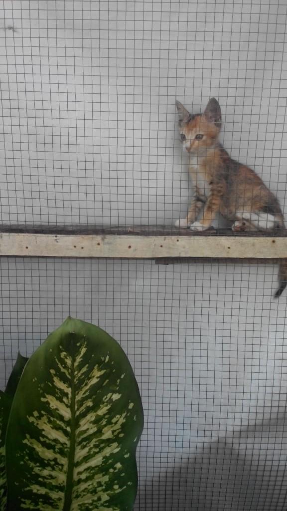 Adopsi Kucing SUNDAY