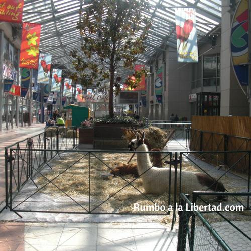 Animales en el centro comercial