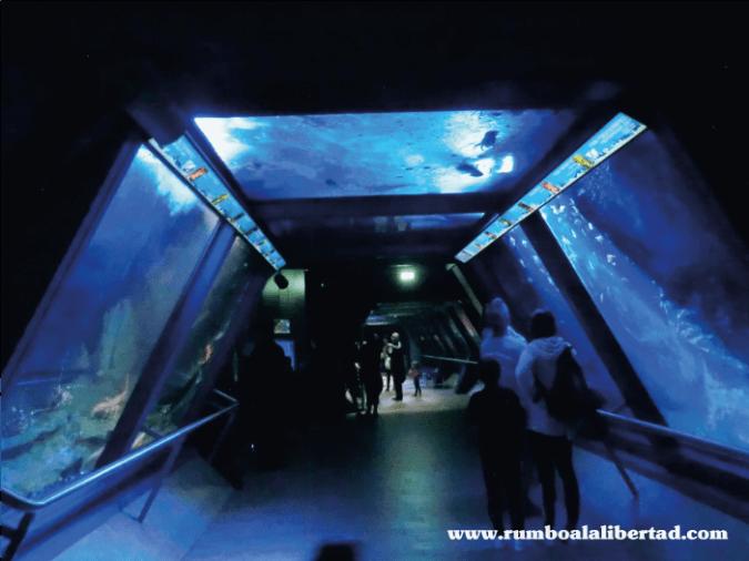 acuario de cattolica en misano adriatico