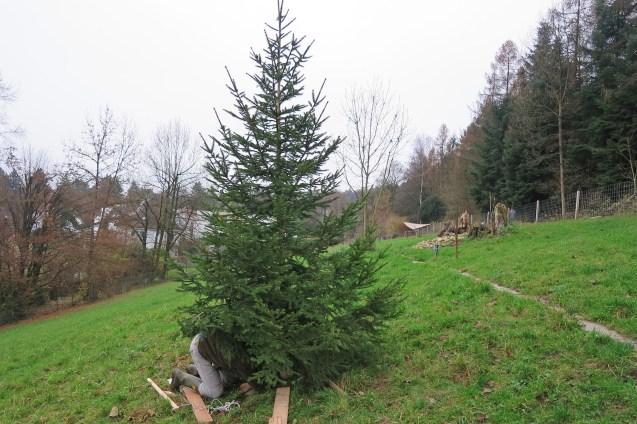 Aufbauen des Baumes
