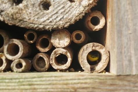 Wildbienen sind im Hotel eingezogen