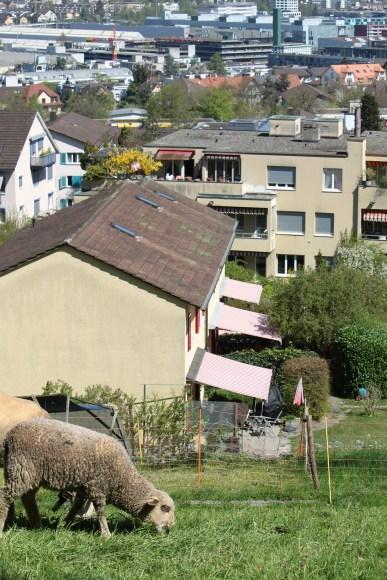 Rumpelhalde_Fruehling17_32