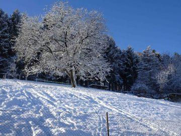 Herbst17_Winter18_Rumpelhalde (3 von 6)