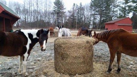 stables Run Away Farm Columbia CT
