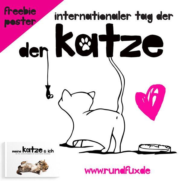 Katzen lieben