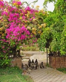 Jodhpur_14042019 (11)_b