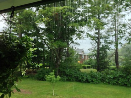 Morning Rain - photograph by Jessica Woods