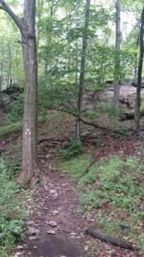 The last marker strands of TNF Bear Mountain 50 miles