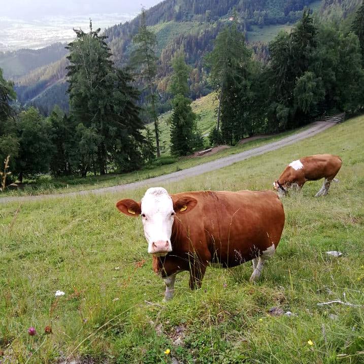 runmylean ist unterwegs mit Hund und Kuh