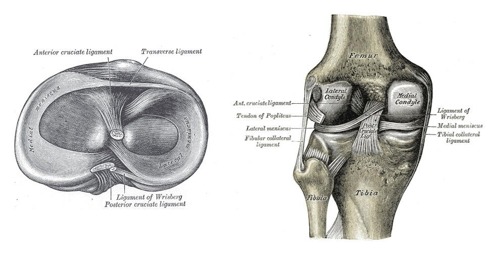 Meniscus tears - Part 1 by Wouter Ramboer | RunningPhysio