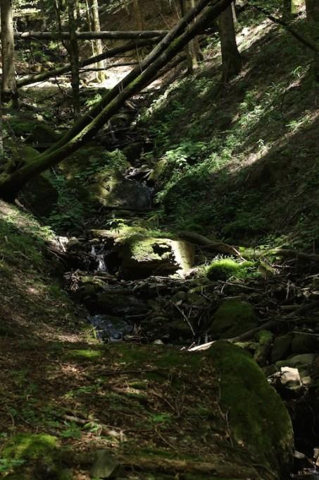 trail_foreste_casentinesi_114
