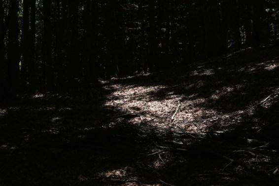 trail_foreste_casentinesi_94
