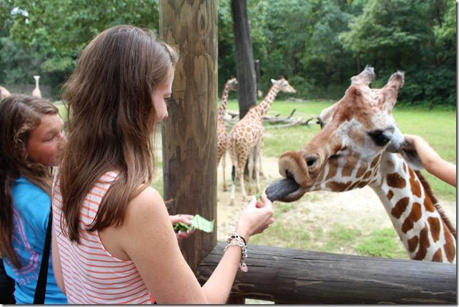 Zoo 202