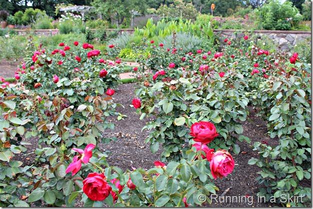 Biltmore_Gardens_rose