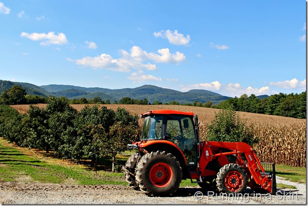 apple-farm-7
