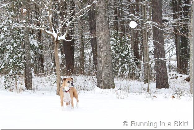 Snow Feb 2015-26-1