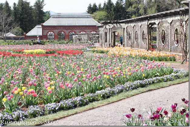 Visiting the Biltmore in Spring is the perfect time to catch the flowers bloom!  The Biltmore Tulips are spectacular!