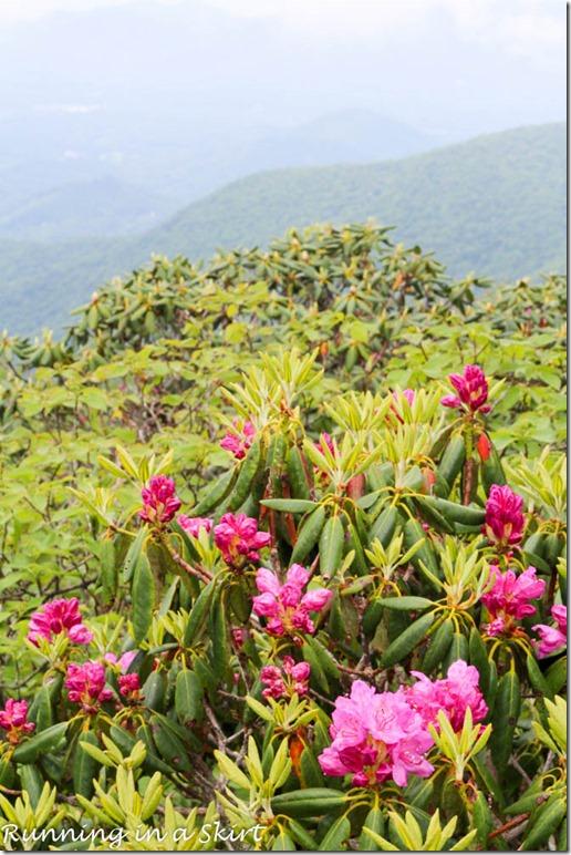 craggy gardens hike-196-16