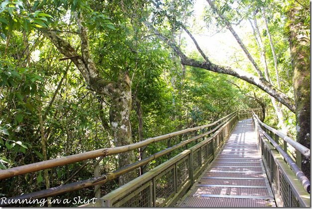 Iguazu Falls- Argentina Side, Upper Trail