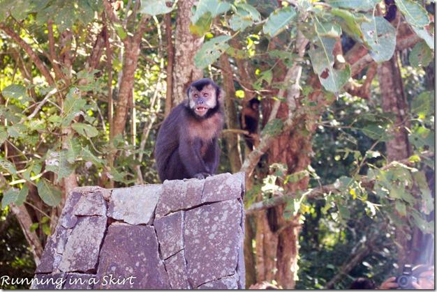 Iguazu Falls- Argentina Side, Monkey