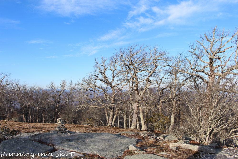 Bearwallow Mountain-193-32