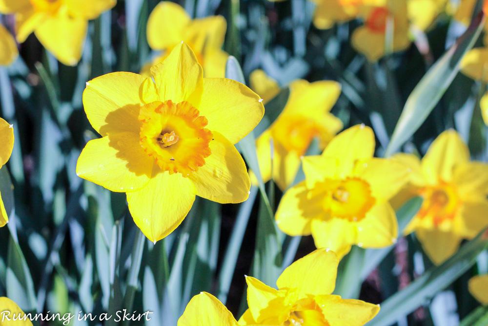 Biltmore Blooms-26-1