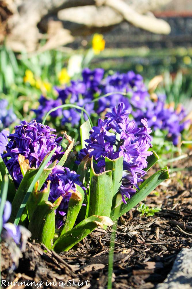 Biltmore Blooms-40-2