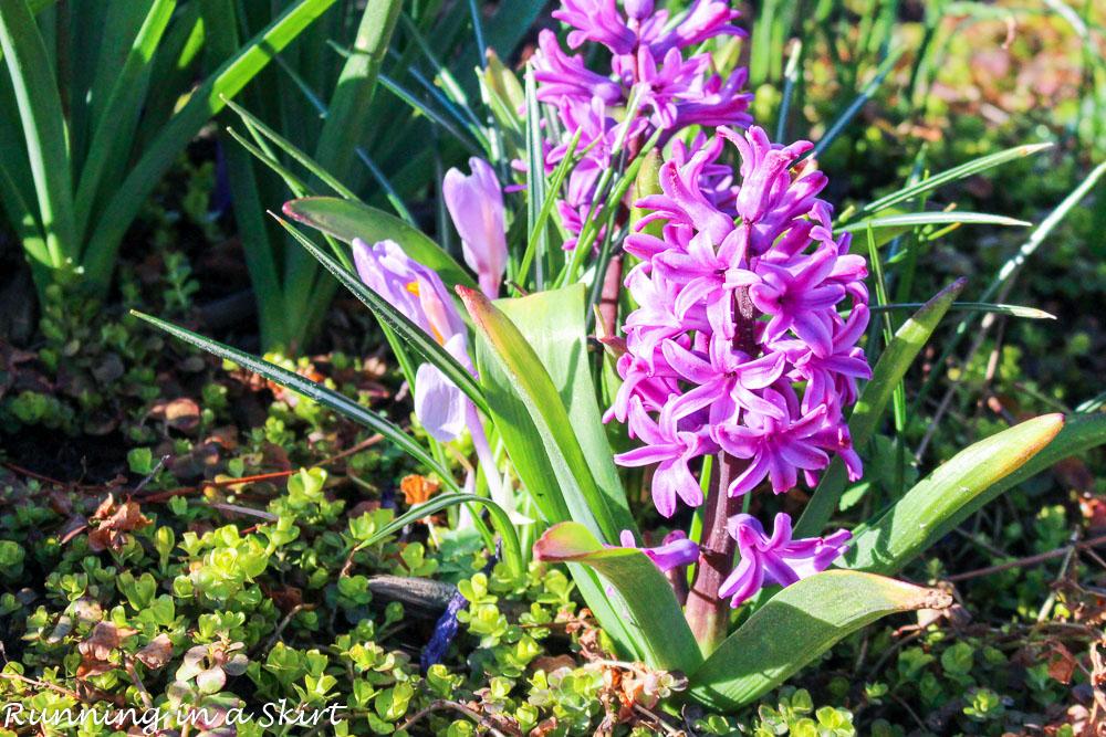 Biltmore Blooms-44-3