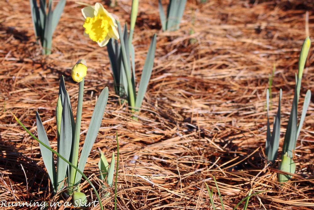 Biltmore Blooms-57-4