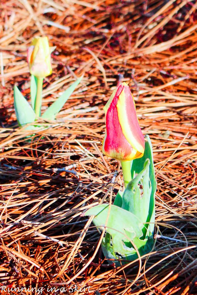 Biltmore Blooms-86-6