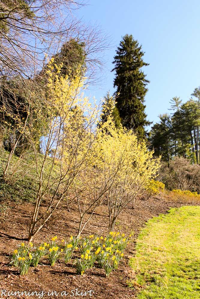 Biltmore Blooms-87-7