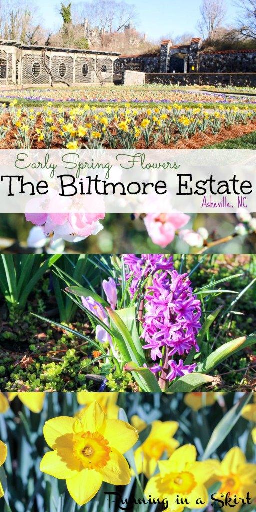 Early Spring Flowers Biltmore Blooms - Biltmore Estate