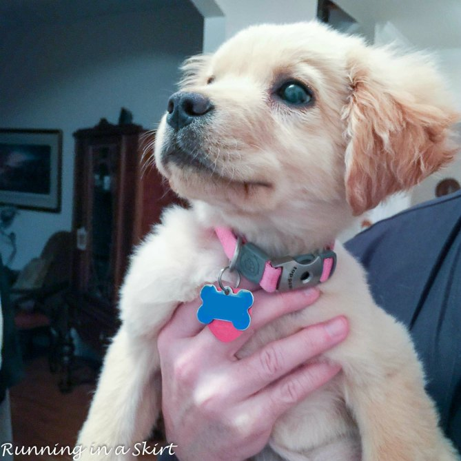 Lilly the Golden Puppy