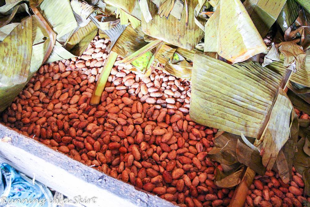 Grenada Belmond Estate chocolate factory (3)