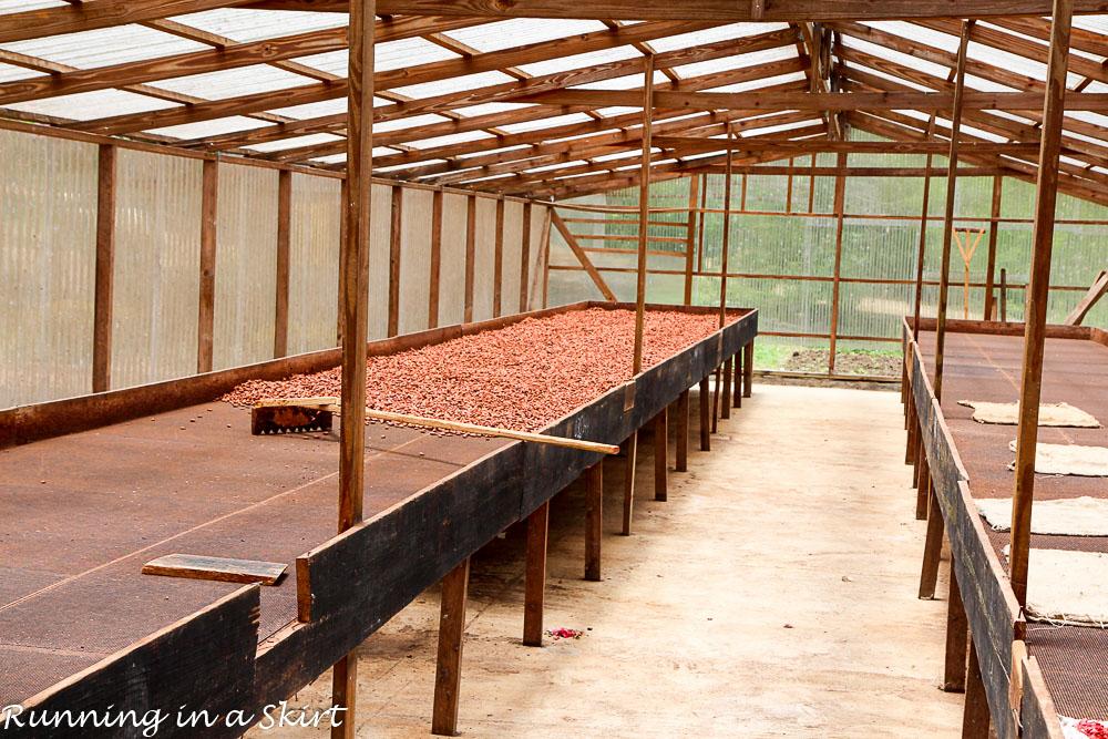 Grenada Belmond Estate chocolate factory (6)