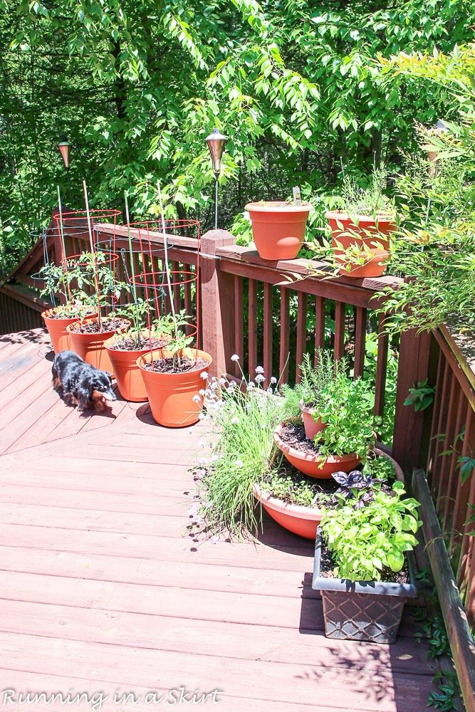 Garden 2016-9-5