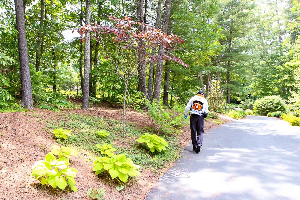 Mosquito Free Summer Backyard Mosquito Control-105-19