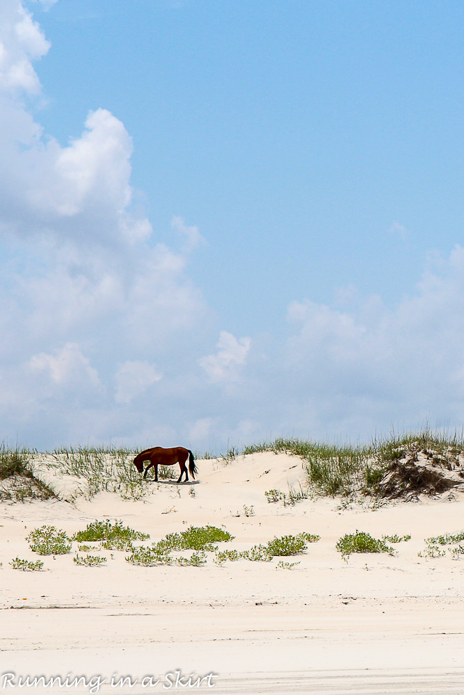 Outer Banks-173-21