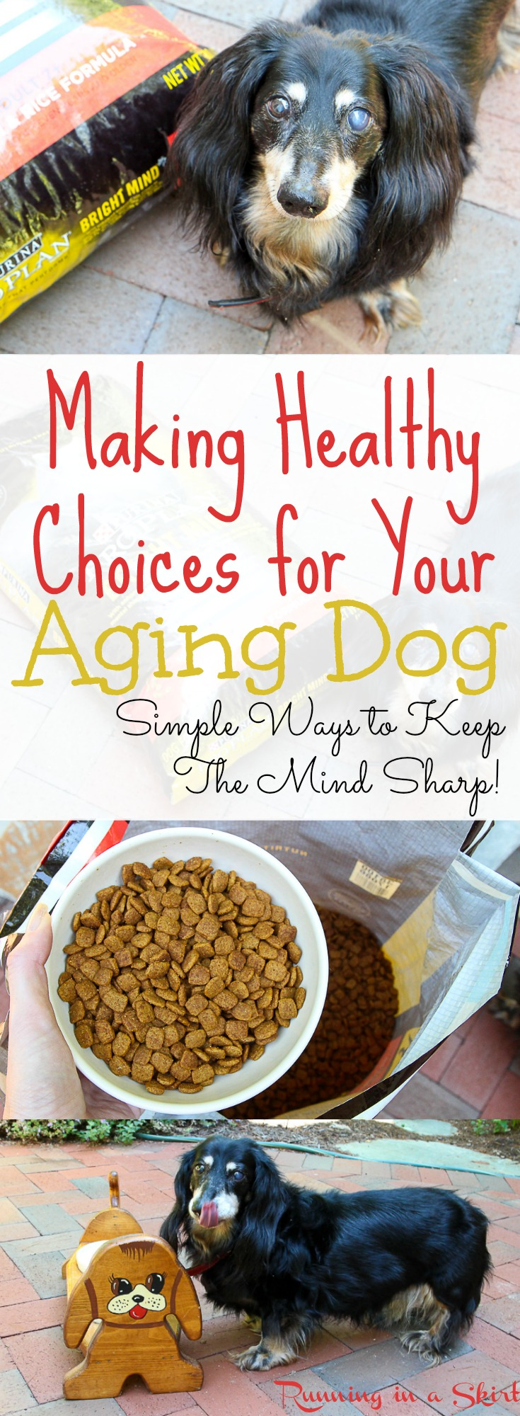 Healthy Choices for an Aging Dog