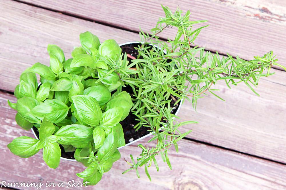 How to Make an Indoor Herb Garden-48-6