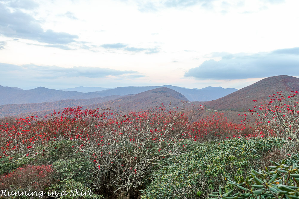 craggy-pinacle-in-fall-8