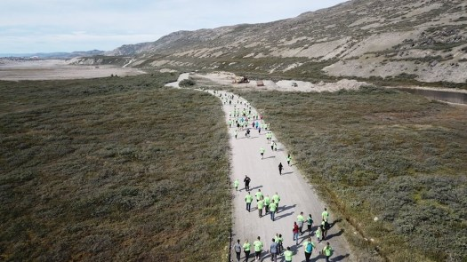 running of the moskus in greenland