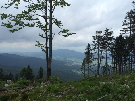 The view down below on the way to the Kleiner Arber