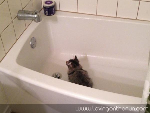 Piper in the Tub