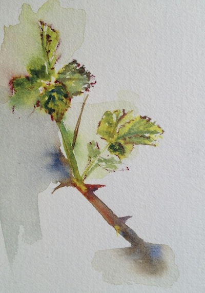Spring bramble www.runningwithbrushes.co.uk