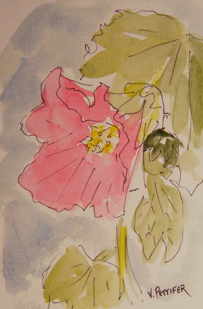 Watercolour painting. Hollyhock (OSS002) Artist: Val Pettifer