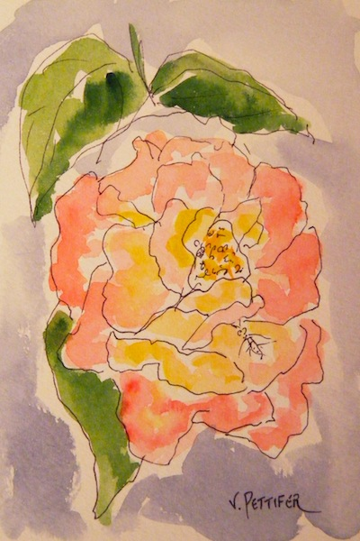 Watercolour painting. Rosy Beauty (OSS003) Artist: Val Pettifer